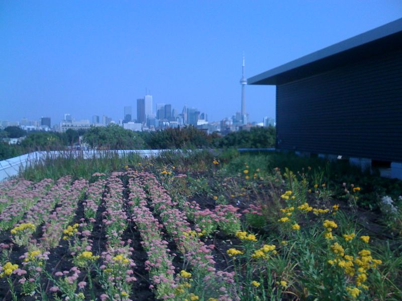 CAMH Green Roof 1