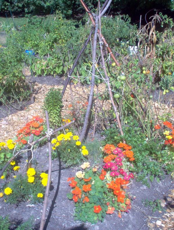 Christie Pits Garden 2